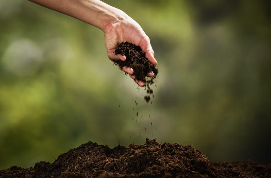Do Pesticides Damage the Soil?